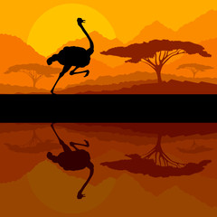 Running ostrich bird in wild mountain nature landscape backgroun