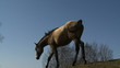 koń na tle nieba