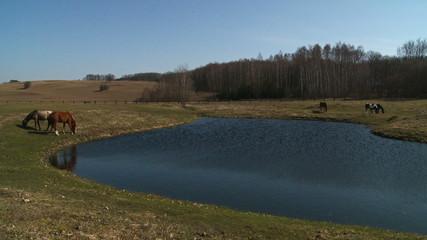 konie jezioro las