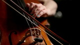 Cello: Cellist close-up on hands high up on finger board