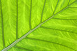 Tropical leaf green background