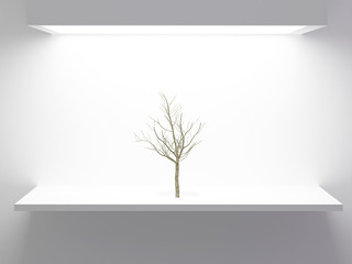 Tree without leaves in front of white wall.