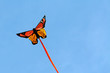 Kite in the sky, insect