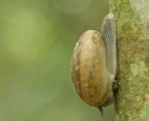 Snail is climbing on the tree