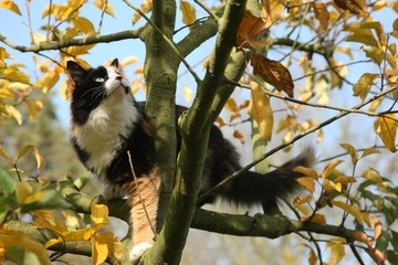A beauty cat on a tree
