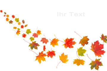 Bunte Herbstblätter auf weißem Hintergrund