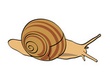 vector snail - isolated