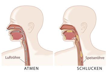 Atmung und Schlucken 1