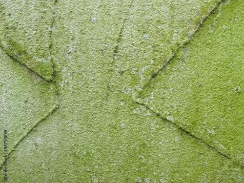 Algen an einem Außenputz