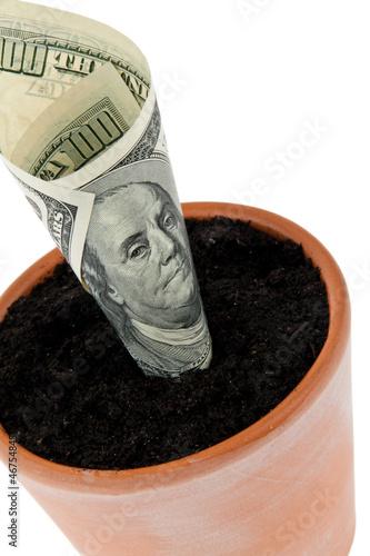Dollar-Geldschein in Blumentopf. Zinsen, Wachstum.
