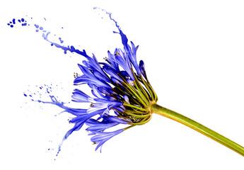 blue flower with splashes