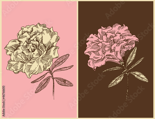 Azaleas. Vintage floral design. Vector illustration.