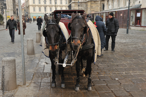 Cavalli in carrozza