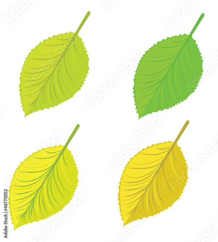 Isolated leaves set