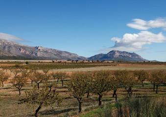 landschaft extrematura mit olivenbäumen