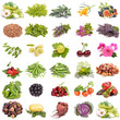 large collection of fruit, berries vegetables