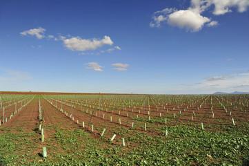 Landschaft nordspanien weinbau