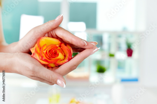 Cherish rose