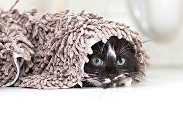 Black-white kitten hiding and peeking