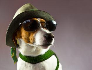 Jack-Russel-Terrier als Steirerbub