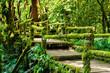 Moss and bridge