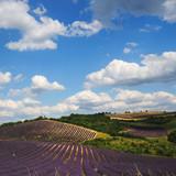 Lavender field. Provence, France