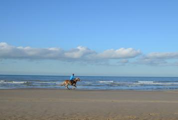 cavalier sur les plages du nord