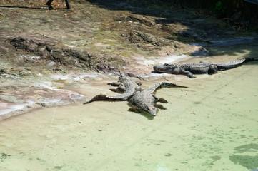 The area of the crocodiles