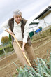 Senior man cultivating vegetables in kitchen garden