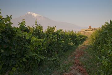 The Khor Virap monastery with Ararat mountain and vineyards.