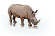 Retrato de un rinoceronte sobre fondo blanco