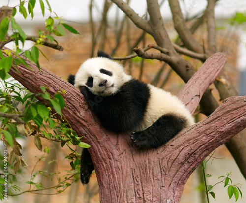 Aluminium Dragen Sleeping giant panda baby