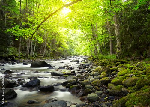 Foto op Aluminium Rivier Mountain River in the wood