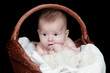 Portrait newborn baby in basket