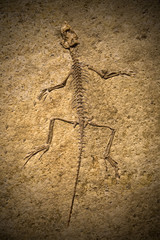 Fossil of a Prehistoric Creature