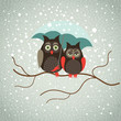 Two cute owls in snowfall
