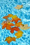 Fall leaves floating in pool