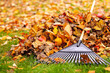 Fall leaves with rake - 46805286