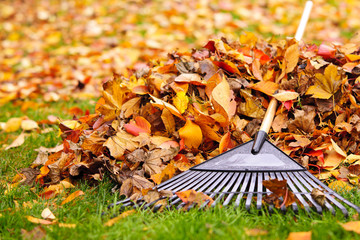 Fall leaves with rake
