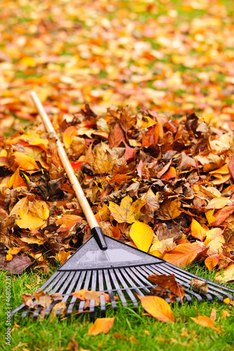 Fall leaves with rake - 46805231