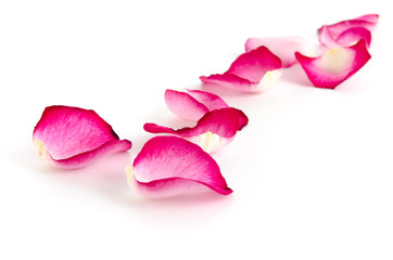 Rosenblätter