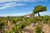 Fototapety Vignobles de Provence