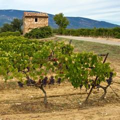 Provence : Cabanon dans le vignoble