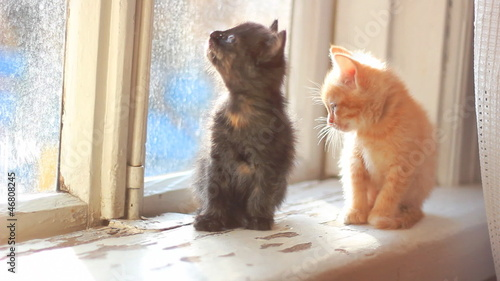 cute kittens sitting on a window sill