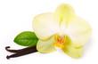 Fototapeten,vanille,blume,stecken,aroma