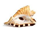 Fototapete Chitin - Closeup - Schalentiere