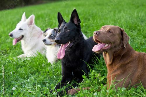 Vier ausgepowerte Hunde