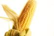 Mais Corn