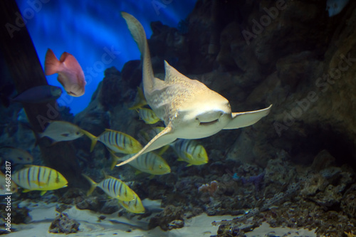 shark swimming along underwater