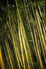 Bambou, forêt, bosquet, jardin, bois, végétal, plante © Redzen